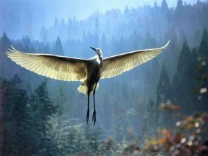 La Grue déploie ses ailes